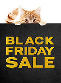 funny pet cat showing black friday sale golden text written on black placard isolated on white background