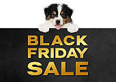 funny pet puppy dog showing black friday sale golden text written on black placard isolated on white background