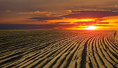 Sunset over plowed field