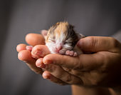 colorful kitten in woman hands
