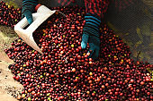 close up of  fresh coffee beans