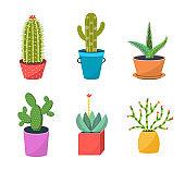 Cacti in pots flat vector illustration set