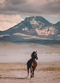 Wild horse running alone against mountain background