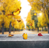 Falling Leaves In a City Park