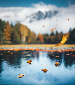 Autumn Scene With Falling Leaves