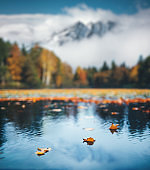 Autumn By The Lake