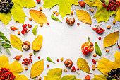 Autumn background composition.