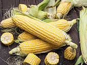 Ear of maize or corn.