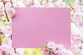 Paper blank between flowering almond branches in blossom. Pink flowers as a frame.