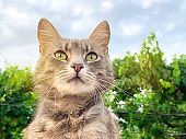 Cute gray cat on a blue sky background and in green. Pet. Animal.