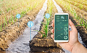 Farmer's holds a smartphone on a background of a field with a leek plantation. Agricultural startup. Automation and crop quality improvement. High technology, innovation. Scientific research. Pomology
