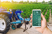 A hand is holding a smartphone with infographics on background of tractor and Bulgarian pepper plantation. Farming and agriculture. Agricultural machinery, data analyzing on plants status. harvesting