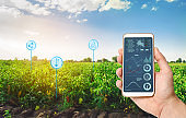 Farmer holds a smartphone on a background of a field with a peppers plantations. Agricultural startup. Automation and crop quality improvement. High technology, innovation. Scientific research.