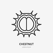 Chestnut flat line icon. Vector thin sign of nut, healthy food outline illustration