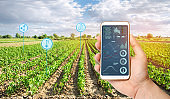 Farmer's holds a smartphone on a background of a field with a pepper plantations. Agricultural startup. Automation and crop quality improvement. High technology, innovation. Scientific research.