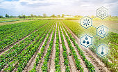 Scientific work and development of agriculture. High technologies and innovations in agro-industry. Agricultural startup. Automation and crop quality improvement. Innovation. Pepper