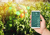 Farmer hold a smartphone on a background of a field with a pepper. Agricultural startup. Automation and crop quality improvement. High technology, innovation. Scientific research.