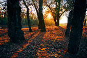 beautiful trees in the autumn forest near the river, bright sunlight at sunset