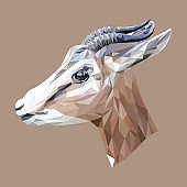 Wild goat low poly design. Triangle vector illustration.