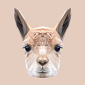 Llama low poly design. Triangle vector illustration.