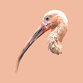 Ibis bird low poly design. Triangle vector illustration.