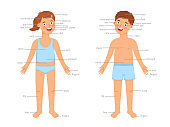 Kids body parts infographic