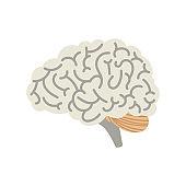 Human cartoon brain isolated on white background