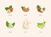 Different variation of plant based milk. Nuts set: hazelnut, coconut, almond, soy bean, oat, cashew.