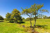 Little tree in green landscape
