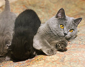 Mom cat and little kittens