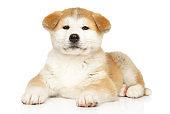 Japanese Akita-inu puppy on white background