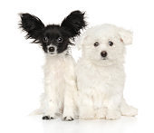 Little puppies together on white background