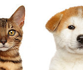 Kitten and Puppy Half Face, Isolated White