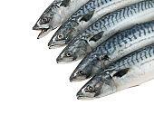 Raw mackerel fishes isolated on white