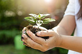 Young plant tree sprout in woman hand. Concept of farming and environment protecting.