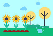 Field with Growing Sunflowers Vector Illustration