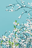 Floral abstract art on turquoise background, vintage cherry flowers as nature backdrop for luxury holiday design