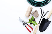 Garden tools and green plant in pot on white background