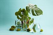 pilea peperomioid monstera rock grass and water