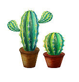 Two tropical watercolor cactus in pots isolated on white. Exotic desert succulent icon, fabric print, decoration element. Cactus closeup. Summer object print