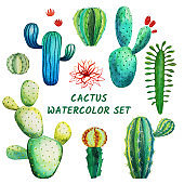 Watercolor cactus collection isolated on white. Tropical water painted cactus plants for decoration, fabric print, floral design elements, exotic succulent set. Banner, invitation card, poster, decor