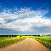 Beautiful gravel road in yellow green lush agricultural crop fields on a summer day in Latvia countryside