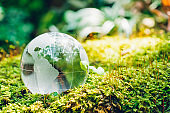 Globe glass in grass forest on nature background