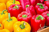 Fresh colorful Bell peppers in organic farm