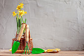 Gardening tools and seedling of spring flowers on grey background.