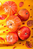Autumn composition with pumpkins, rowan berries on sunny yellow background in harsh light. Fall, thanksgiving concept.