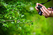 Hands of a young girl holding a compact camera while taking a close-up picture in the forest