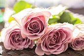 Macro delicate fresh pink rose  flower. Wedding fresh flowers decoration.