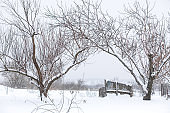 Winter landscape. Trees without foliage in a field covered with snow