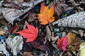 Fallen leaves in forest of Nikko